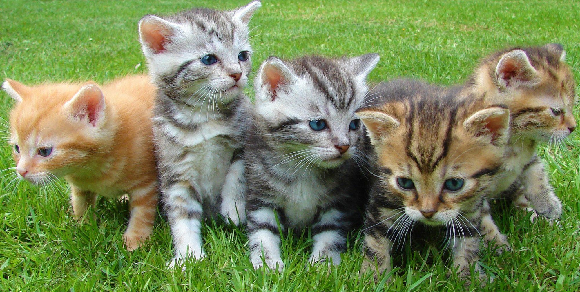 Marjorie Nash Cat Rescue